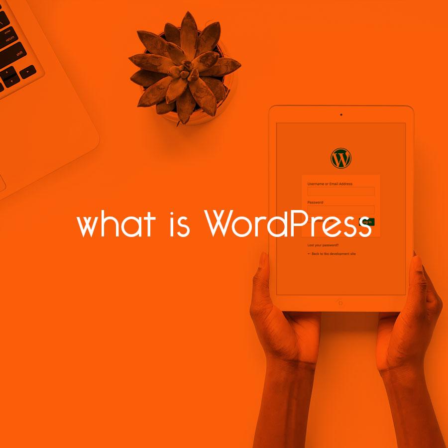 what is WordPress // tiny blue orange